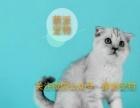 【萌派宠物】可信赖的宠物购买平台,蓝猫,折耳,渐层