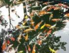 观赏性鱼池设计施工生态环保永不换水
