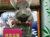 咪奇龙猫 龙猫用品,兔子用品