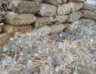 废玻璃高价回收