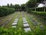好环境好永久性公墓红枫艺术陵园公墓地址欢迎约预参观
