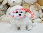 高品质卷毛比熊犬 终身质保 质量三包可签协议有公母