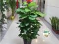 北新泾天山路仙霞路长宁路长宁区花卉租赁绿植植物租摆