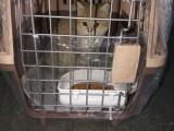 國內國際寵物托運,寵物托運費用標準