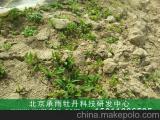 油用牡丹种植合作包回收
