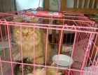 自家养猫咪便宜出售