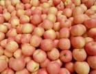 山东冷库红富士苹果多少钱一斤