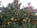 求一个可以带着橘子去看世界的有缘人