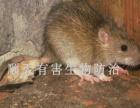 保洁、广告勿扰,专业灭鼠,灭蟑螂、除四害!