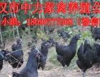 政府扶持项目鸡鸭鹅苗养殖成本长期合作包售后销路