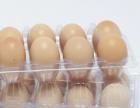 【坩域乃酉】沙漠散养土鸡真空包装销售