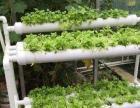 现代农业、阳台种菜、屋顶农庄、无土栽培、有机养生菜