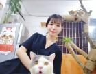 广州ζ猫咪家庭寄养