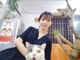 廣州貓咪家庭寄養