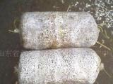 食用菌菌棒 蘑菇 平菇 木耳 榆耳 菌种菌棒 平菇菌棒菌包