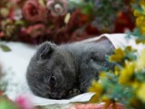 廣州寵物火化 寵物殯葬 動物尸體無害化處理 寵物善終