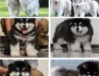 上海狗市 上海宠物品种 上海宠物狗价格 上海哪里有狗卖