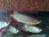 观赏鱼 2000元