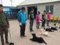 沈阳全国连锁宠物美容师训导师培训学校招生
