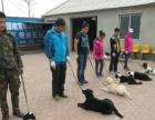 宠物美容师训犬师请来沈阳最好的宠物美容培训学校