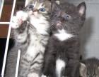 可爱小猫咪优惠出售