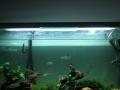 鱼缸清洗 水簇维护 水簇箱维修