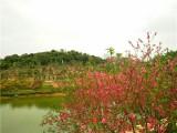 春游赏花 农家乐野炊 松山湖生态园花海野炊