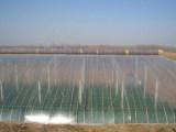 潍坊规模大的PO膜提供商 水晶PO膜生产厂家