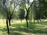 北京市购买墓地需要了解的一些知识