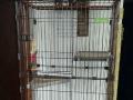 品牌木制四层猫笼