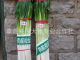 供应批发蔬菜.韩国出口大葱、保鲜大葱  新鲜大葱【图】