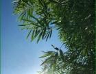 邛崃水口山林转让270亩其中新品李子30亩