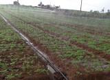 山东哪里供应的喷灌带品质好——山东果树喷灌设备