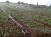 山东规模大的喷灌带生产基地——果树喷灌设备