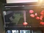 彩蝶鱼缸款
