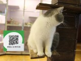 新乡哪里开猫舍卖加菲猫 去哪里可以买得到纯种加菲猫