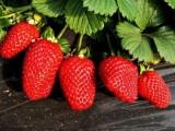 2020年从北京到怀柔水长城一日游 采摘草莓春季一日游