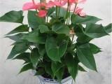 植物出租 植物销售 植物租赁 植物出摆满壹年送一个月