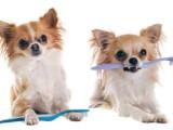 同安专业繁育大中小型宠物犬 保证健康 可送上门