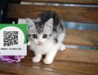 东莞哪里卖虎斑猫 东莞哪里有宠物店 东莞哪里卖宠物猫便宜