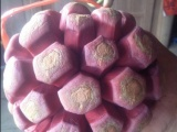 布福娜种子 黑老虎种子 冷饭团种子 藤刚精 冷饭团 菠萝葡萄