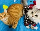 长沙全年猫咪寄养 超值优惠