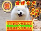犬舍繁殖/纯种萨摩/签订协议/质保三年/免费送货
