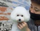 8月10日杭州爱可宠物美容学校