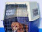济南顺达宠物托运中心-方便准时安全