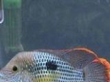 专业清洗鱼缸,鱼池,假山,观赏鱼,送货上门!