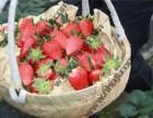 上海南汇农家乐 采草莓赏?#19968;?钓大鱼自助烧烤 春季旅游推荐