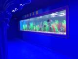 出租广州海洋生物展览场地 洋清海洋展租赁