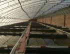 天津大型冷水观赏鱼养殖场批发零售各种中高档兰寿金鱼