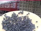 供应纸厂料颗粒韧性纸厂料洗水纸浆料纸膜粒注塑用纸厂颗粒